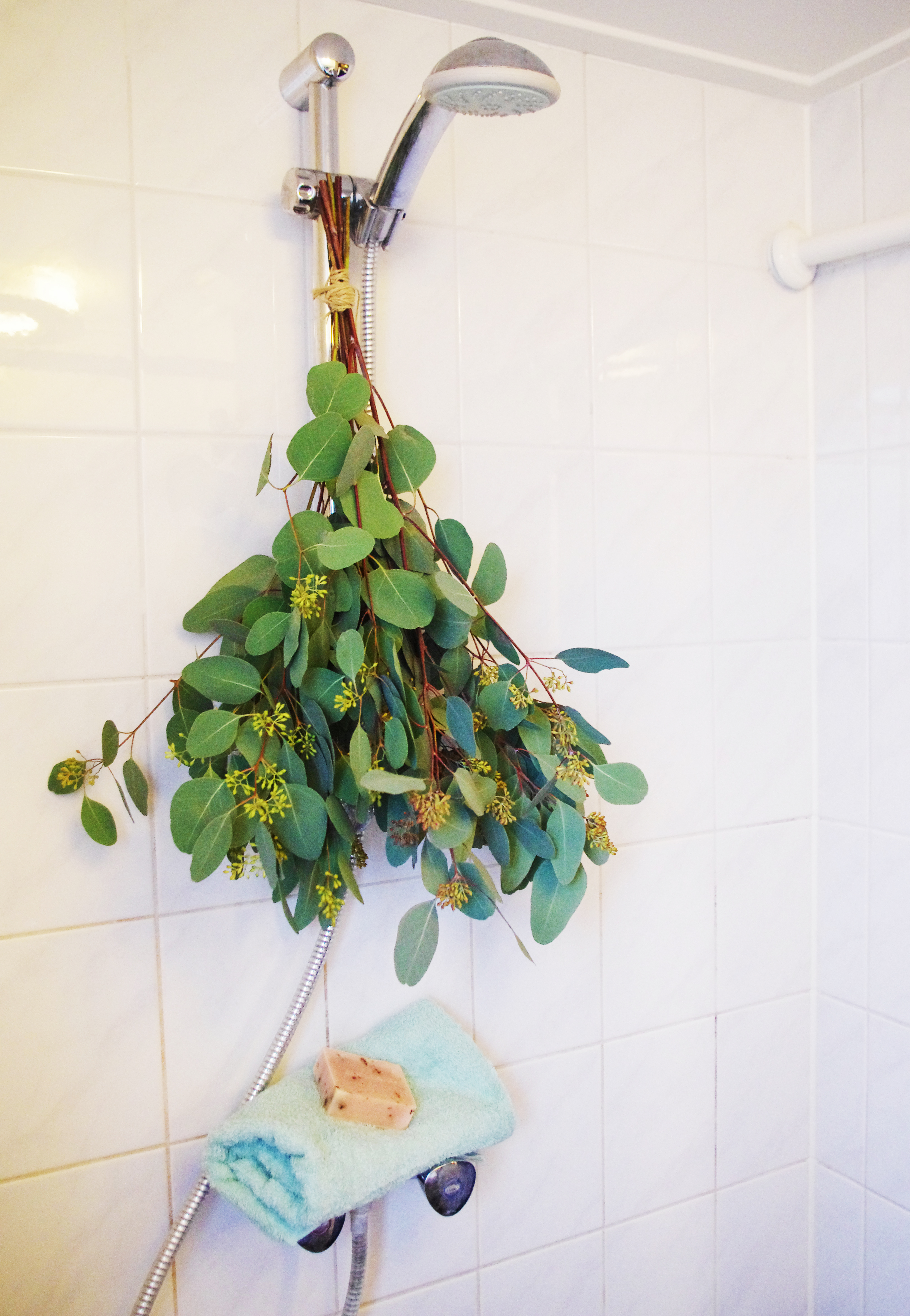 EUCALYPTUS STEAM SHOWER DIY
